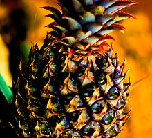 Pineapple by keisakura