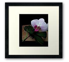 Orchid realistic flower illustration Framed Print