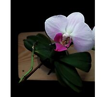 Orchid realistic flower illustration Photographic Print