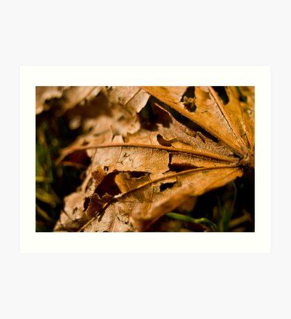 Ragged Leaf Art Print