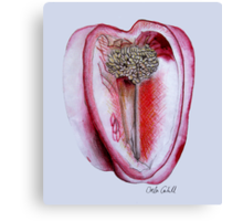 Seedy Red Pepper Canvas Print