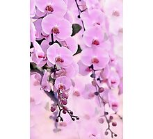 Pink Orchid dream Photographic Print