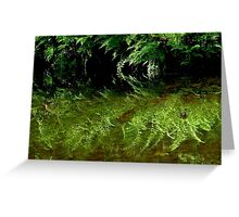 Where The Wild Ferns Grow Greeting Card
