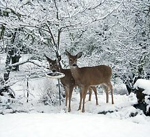 White Tails white Christmas by SKNickel