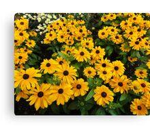 Bright yellow summer flowers Canvas Print
