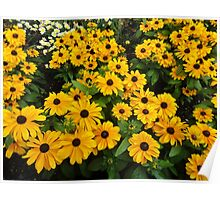 Bright yellow summer flowers Poster