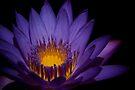 Inner Glow by Vikram Franklin