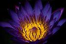 Deep Glow by Vikram Franklin