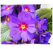 Spring flowers purple Poster