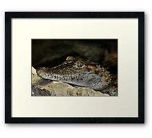 Philippine Crocodile Framed Print