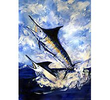 Two Marlin a Blue and a Striper Photographic Print