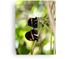 Hanging on a Moment Canvas Print