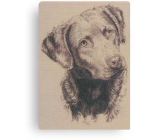 Chesapeake Bay Retriever Canvas Print
