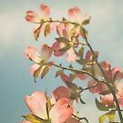 Pink Dogwood by Bethany Helzer