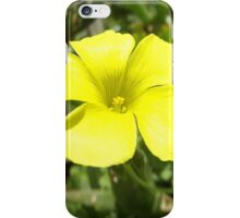 Yellow flower 2 iPhone Case/Skin