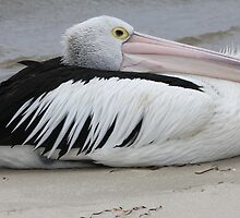 Is it a bird? by Kelly Robinson