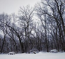 Winter's Arboreal Majesty  by Robert Meyers-Lussier
