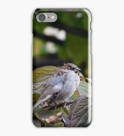 Sparrow iPhone Case/Skin