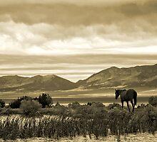 Twilight Panorama by Arla M. Ruggles