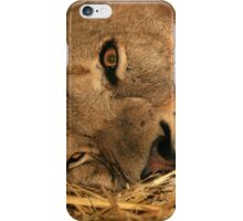 King of the Pride iPhone Case/Skin