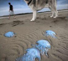 Blue invasion by Garry Schlatter