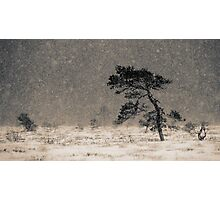 'Under the Snowstorm I' Photographic Print