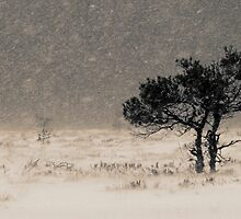 'Under the Snowstorm II' by Petri Volanen