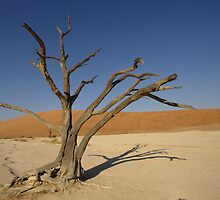 Deadvlei tree by ShotByArlo