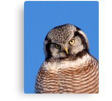 Northern Hawk Owl 5 Canvas Print