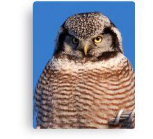 Northern Hawk Owl 6 Canvas Print