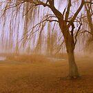 Winter Willows by Cricket Jones