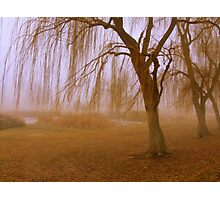 Winter Willows Photographic Print