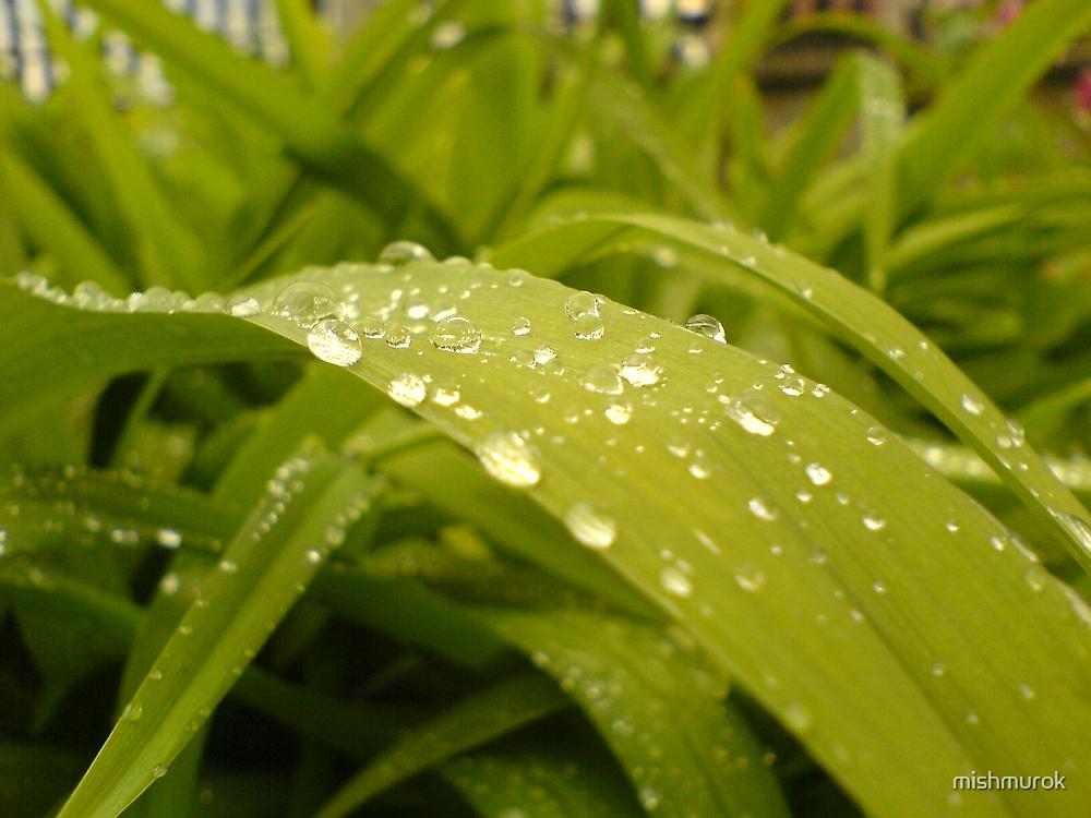 Raindrops on leaf by mishmurok