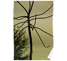 the undressed tree Poster
