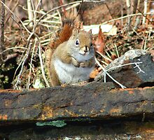 A Cold Squirrel by HALIFAXPHOTO