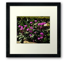 Is Spring On The Way #2 Framed Print