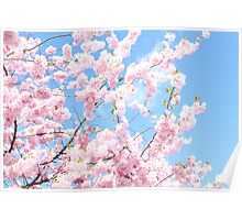 Blooming cherry tree - flower / floral design Poster