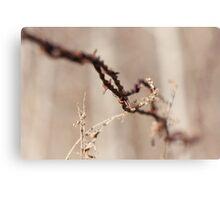 Rusty Wire Canvas Print