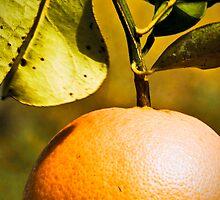 Odessa Citrus by CB Creative