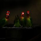 .... four of a kind ... ( Enlarge please )  by John44