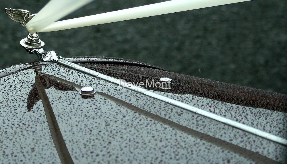 Austin Light 12/6 Wedding Car Ribbons by DaveMont