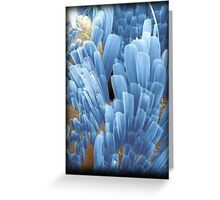 Fish scale Greeting Card