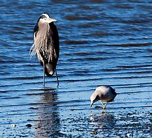 Heron and Seagull by David Chappell
