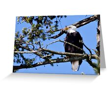 Skagit Valley Eagle 1 Greeting Card