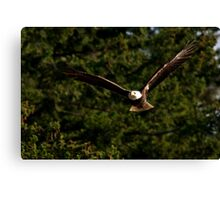 Skagit Valley Eagle 3 Canvas Print