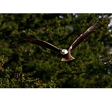Skagit Valley Eagle 3 Photographic Print