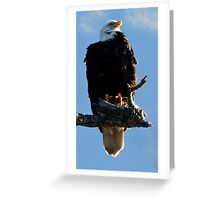 Skagit Valley Eagle 5 Greeting Card