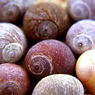 cluster of shells by SNAPPYDAVE