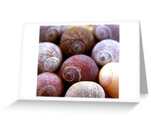 cluster of shells Greeting Card