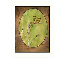 Dragon Fly On Tortoise Shell Art Print
